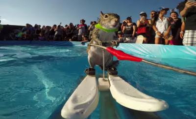 катерица кара водни ски